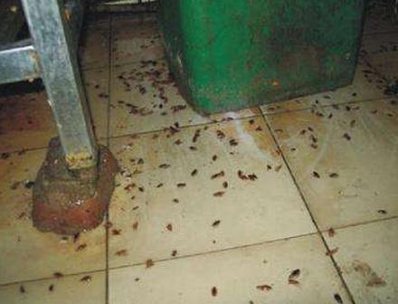 厨房灭蟑螂案例展示