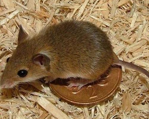 重庆灭老鼠